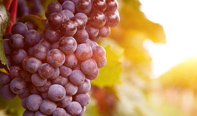 Weinwirtschaft-Rechteck